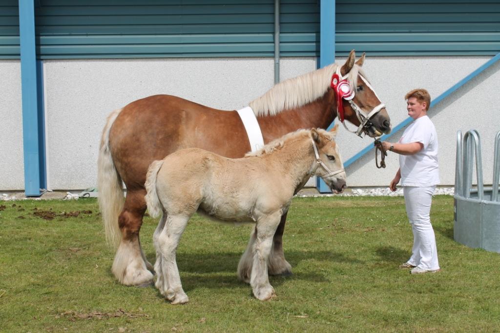 hest og føl
